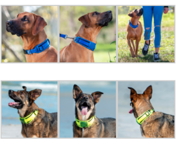 Rogz multi image padded collar