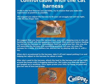 Cat harness  and leash guide square