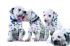 Rogz Dog Collar Utility Extra Small (Puppy) - Firefly
