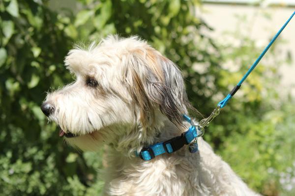 Rogz Medium Dog Collar Reflective - Utility Snake