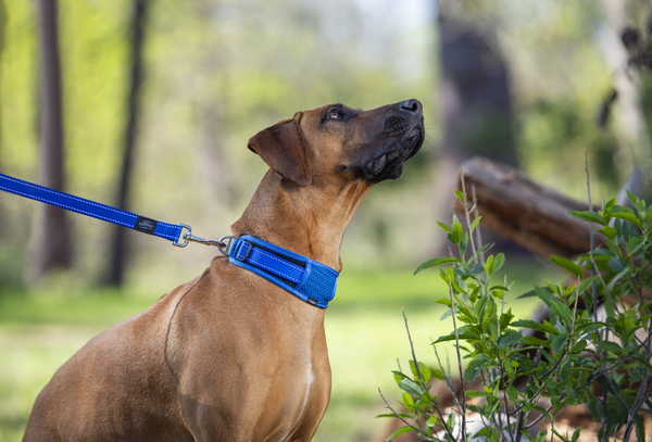 Rogz Large Padded Classic Dog Collar Utility fits 12 - 16.5in neck