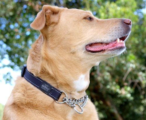 Rogz Obedience Dog Collar