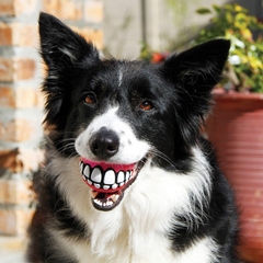 Rogz Dog Ball Grinz Large with Teeth Smile 3in