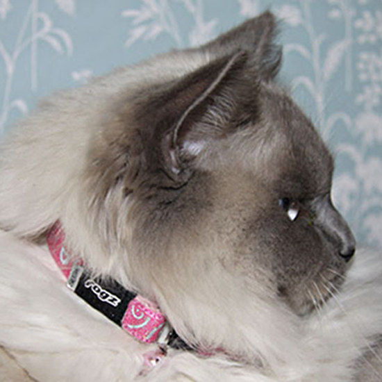 Rogz SparkleCat Pin Buckle Cat Collar  X-Small