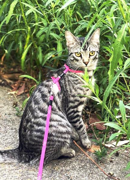 Rogz KiddyCat Cat Harness And Lead Set
