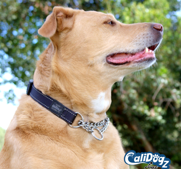 Rogz Reflective Obedience Collar for Large Dog Training -  Utility Fanbelt fits neck 16 - 22in