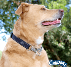 Rogz Dog Training Collar Reflective X-Large Lumberjack  Fits 19-27in neck