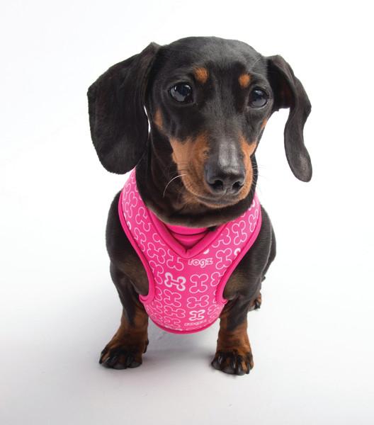 Rogz Dog Harness - Lapz Trendy Wrapz -  Medium