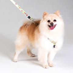 Dog Lead Lapz Trendy - Medium  1.8m-6ft