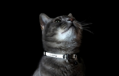 Rogz GlowCat Cat Collar Kittyrogz Small Safeloc Buckle Glow in Dark