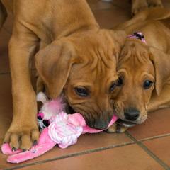 Rogz Pupz Toy Cowboyz - Small